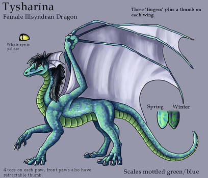 Tysharina Ref Sheet by Zyleeth by Tysharina