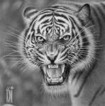 T. Benggala by toniart57