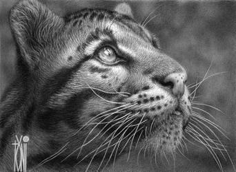 cat's gaze by toniart57