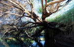 TREE ON WATER by ANOZER