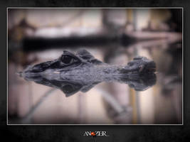 WATCH CAIMAN by ANOZER
