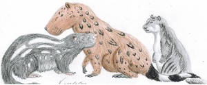 Dinomyidae by VenturaSalas