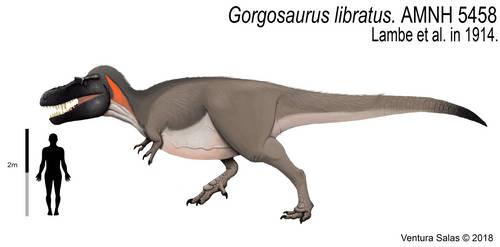 Gorgosaurus libratus (adult version). by VenturaSalas