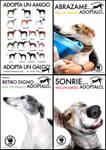 Sos Greyhound posters by liransz