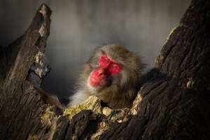 Monkey in Red ... it's just you and me by DeviantTeddine
