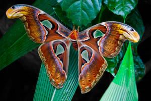 25 cm Wingspan by DeviantTeddine