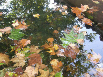 Spain - M19 Wet autumn leaves by Gwathiell