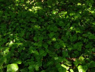 Arboretum - Green Ground by Gwathiell