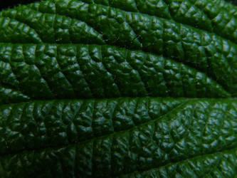Arboretum - Leaf Macro by Gwathiell