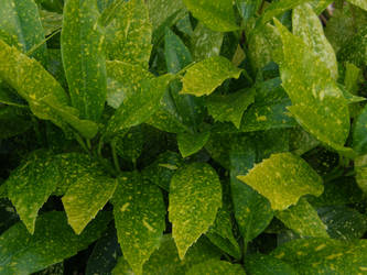 Arboretum - Leaves by Gwathiell