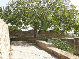 Spain T37 A Tree by Gwathiell