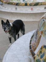 Spain Fr22 Doggie visitor by Gwathiell