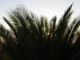 Spain Sa2 Sunrise palm by Gwathiell