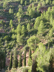 Spain Sa44 Hill forest I by Gwathiell