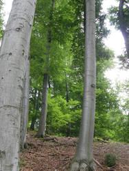 Metal tree by Gwathiell