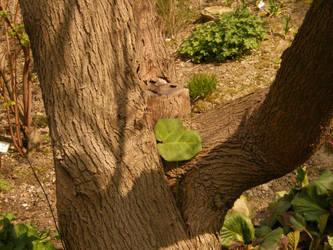 Arboretum - Leaf by Gwathiell