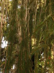 Arboretum - Conifer by Gwathiell