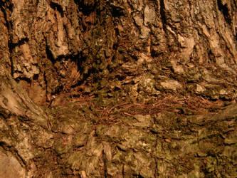 Arboretum - Dead alive tree by Gwathiell