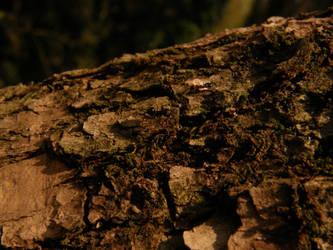 Arboretum - Ant by Gwathiell