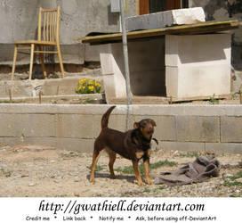 Lefantovce - Doggie I by Gwathiell