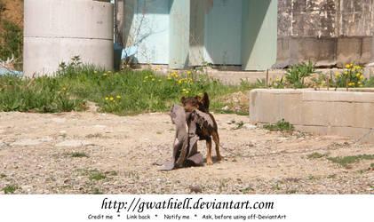 Lefantovce - Mad doggie by Gwathiell
