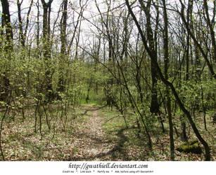 Velka Skala - The forest by Gwathiell