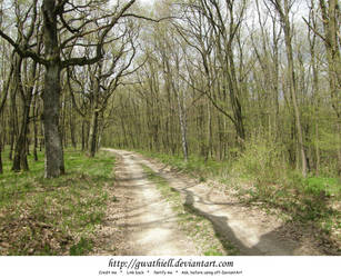 Velka Skala - Forest II by Gwathiell