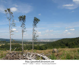 Mushrooms - Three trees by Gwathiell