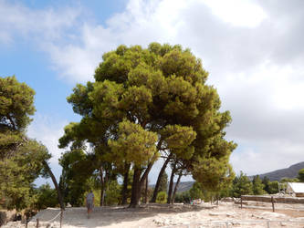 Crete - Tree by Gwathiell