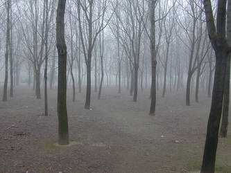 Fog - 01 by Gwathiell
