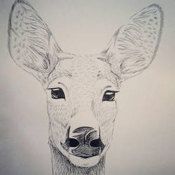 sarna deer by Rabdaliah