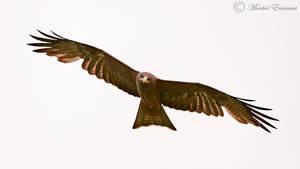 Soaring Kite by MorkelErasmus