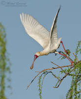 Launch of the Spoonbill by MorkelErasmus