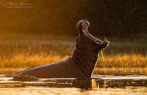 Golden Jaws by MorkelErasmus
