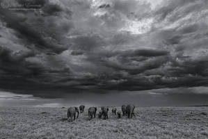 Into the Storm by MorkelErasmus