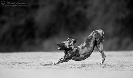 The Stretch by MorkelErasmus