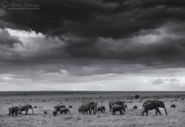 Under Elephant Skies by MorkelErasmus