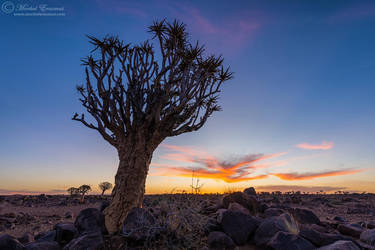 Quiver Tree Sunset by MorkelErasmus