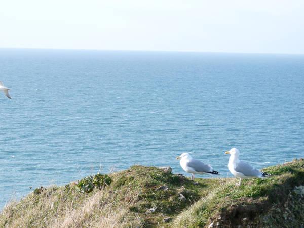 gulls by krokette