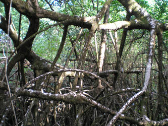 la mangrove by krokette