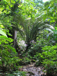 foret tropicale by krokette