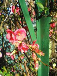 fleurs by krokette