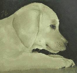 MS Paint dog by kasukoxan
