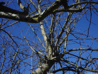 Winter tree I by Arnax