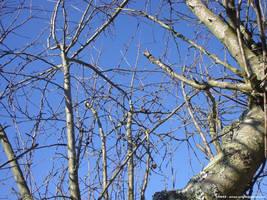 Winter tree II by Arnax