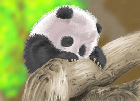 Baby Panda by hanasomething
