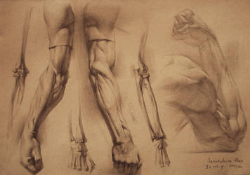 human anatomy 6 by IvanLaliashvili