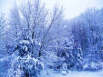 Another Picture of Winter by Quietcrazyness4