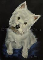 Nina - Westie portrait by Canis-Lupess