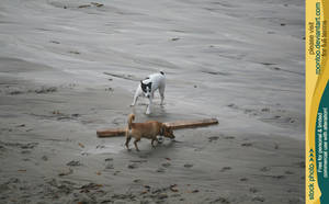 Dog beach 6 by RoonToo